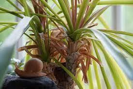 shade tolerant succulents