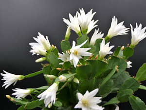 7 Easy Easter Cactus Care Tips